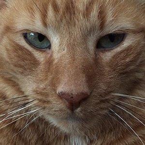 Photo of Jack the Studio Cat