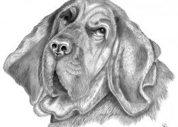 K9 Abby Bloodhound Portrait