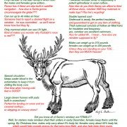 Anatomy of a reindeer illustration