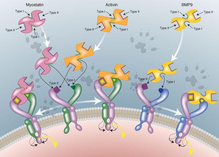 molecular science simplified